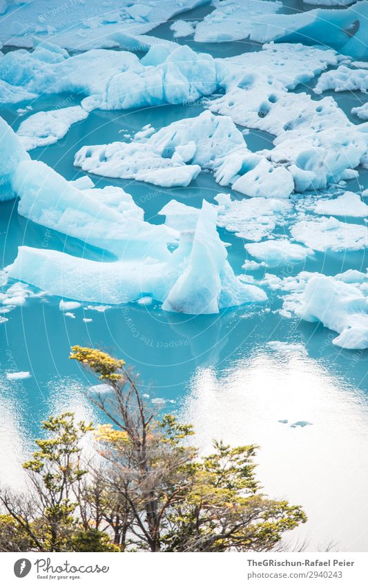 ice floes Nature Blue Turquoise White Lake Ice floe Tree Snow Perito Moreno Glacier Travel photography Vacation & Travel Discover Argentina Colour photo