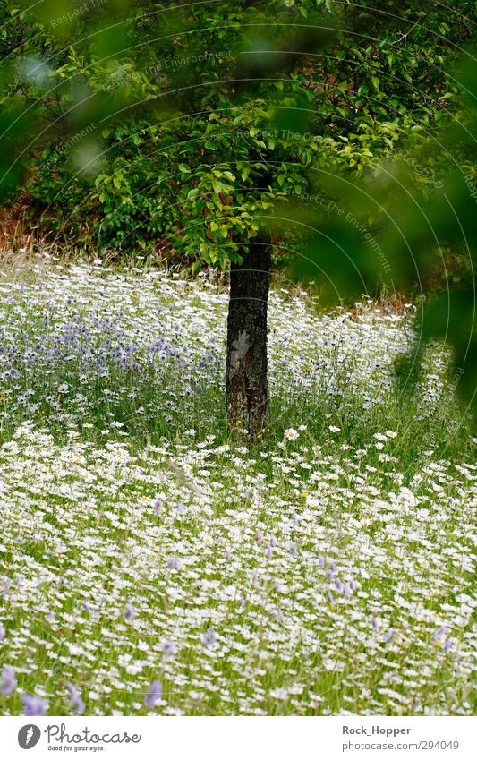 flower meadow Relaxation Calm Vacation & Travel Summer Garden Environment Nature Plant Tree Flower Grass Bushes Leaf Blossom Foliage plant Daisy Apple tree Park