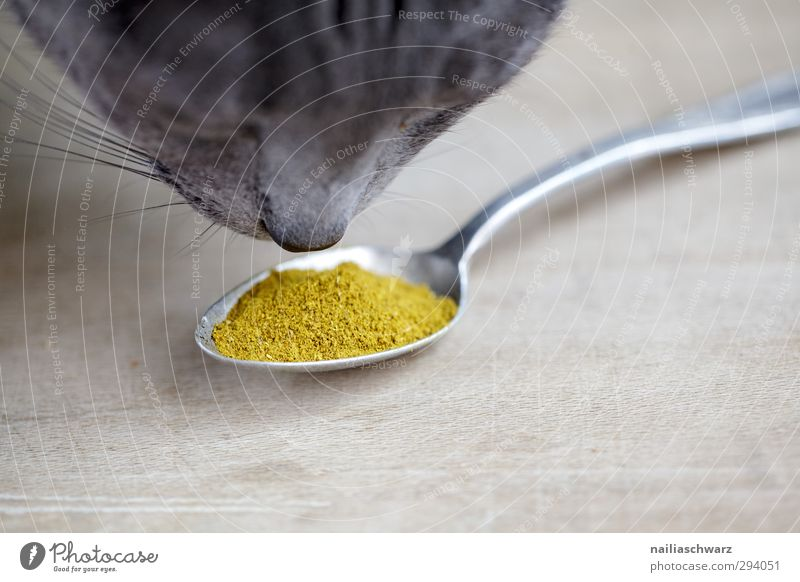 Cat Blue Beautiful Animal Yellow Gray Natural Food Cute To enjoy Curiosity Herbs and spices Delicious Pet Fragrance Positive