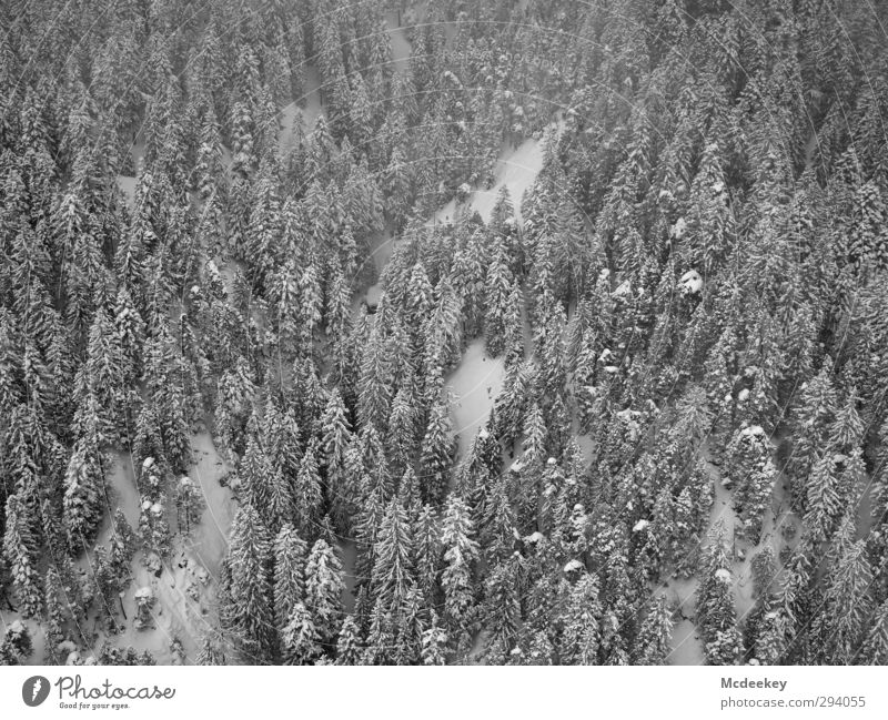 Nature White Plant Tree Landscape Winter Black Forest Dark Mountain Cold Snow Gray Snowfall Fog Multiple