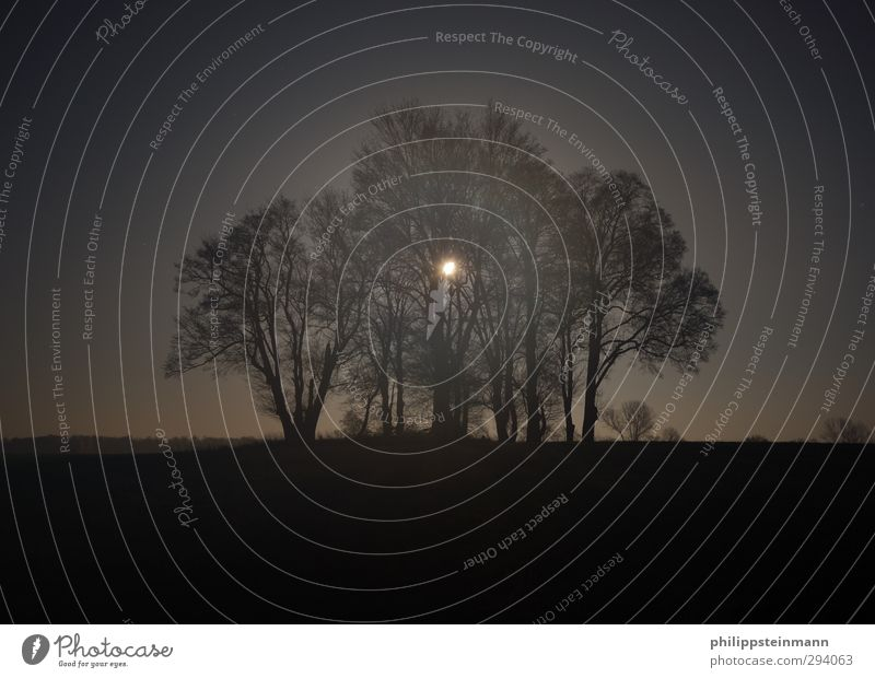 moon forest hiking Vacation & Travel Adventure Nature Landscape Night sky Autumn Fog Tree Field Dark Creepy Blue Black To console Calm Fear Loneliness
