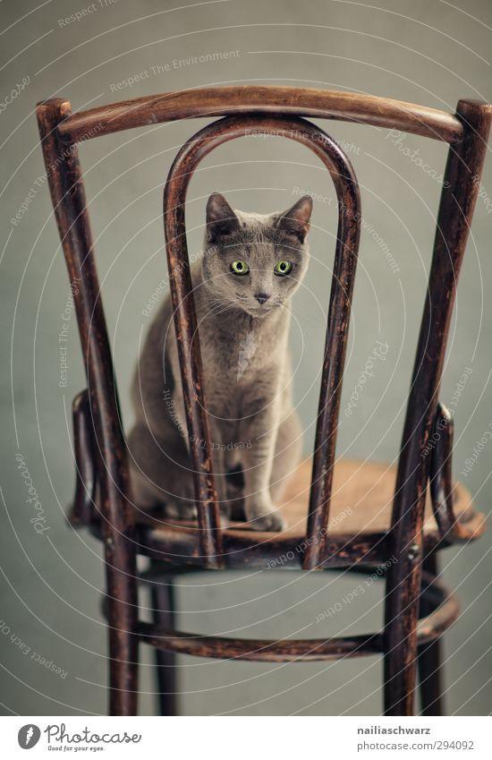 Cat Beautiful Animal Funny Wood Gray Brown Natural Sit Elegant Happiness Cute Cool (slang) Observe Friendliness Curiosity