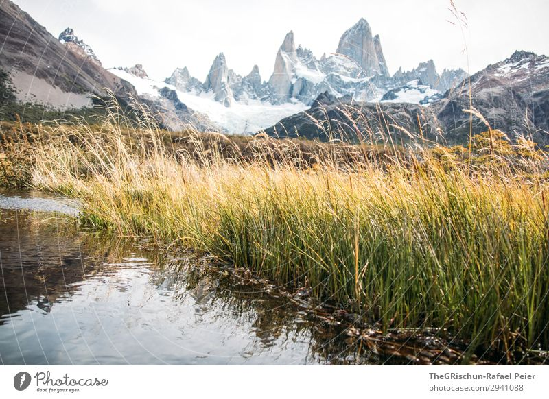 Fitz Roy Environment Nature Landscape Gray Green Black White Fitz Roy mountain Grass Lake Reflection Mountain Argentina el chalten South America Patagonia