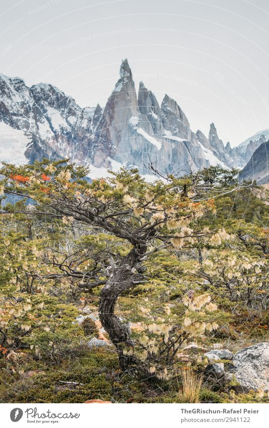 Cerro Torre Nature Brown Gray Green White Tree Mountain range Vantage point Argentina Patagonia Hiking Discover Colour photo Exterior shot Deserted