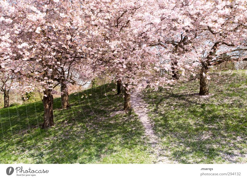 Nature Beautiful Plant Tree Landscape Meadow Life Emotions Spring Park Pink Growth Fresh Beautiful weather Esthetic Trip