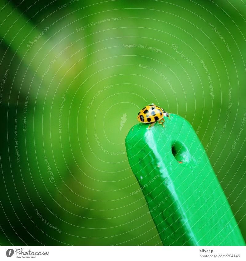 summiteers Beetle 1 Animal Brave Endurance Adventure Nature Target Ladybird Insect Good luck charm bokeh Green Colour photo Exterior shot Close-up