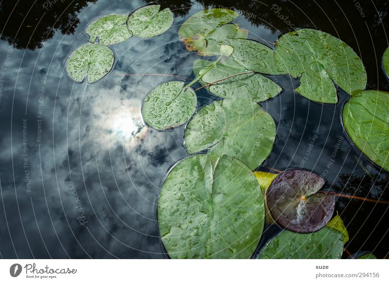 sunbath Environment Nature Elements Water Sky Clouds Plant Leaf Foliage plant Pond Lake Dark Cold Beautiful Blue Green Aquatic plant Surface of water