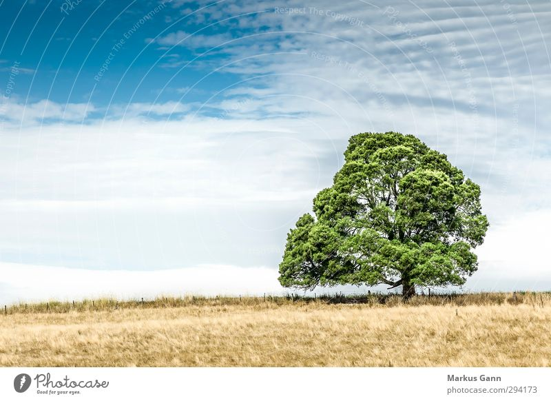 Tree on the meadow Vacation & Travel Summer Nature Landscape Field Blue Brown Yellow Green Calm Romance Drought Dry Clouds Large Strong Old Loneliness