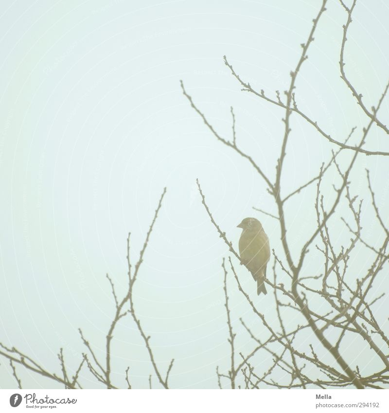 Sky Nature Blue Plant Tree Loneliness Animal Environment Freedom Small Natural Bird Wild animal Sit Fog