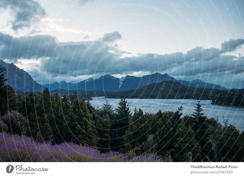 Bariloche Nature Landscape Blue Gray Forest Lavender bariloche Argentina Twilight Lake Mountain Clouds Far-off places Patagonia Colour photo Exterior shot