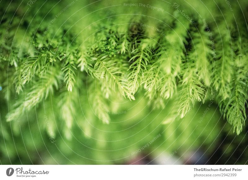 moss Plant Green Moss Grass Detail Growth Color gradient Structures and shapes Colour photo Exterior shot Macro (Extreme close-up) Deserted Copy Space top