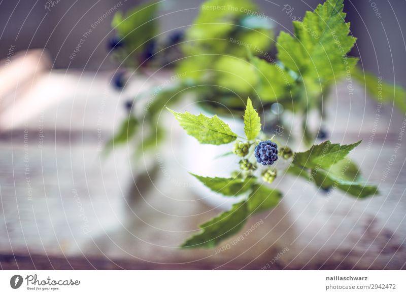Nature Summer Plant Blue Colour Beautiful Green Healthy Environment Natural Garden Fruit Nutrition Fresh Power To enjoy