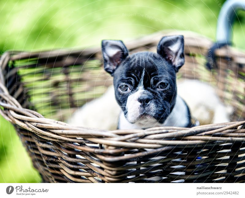 Journey with the dog Lifestyle Joy Leisure and hobbies Vacation & Travel Tourism Trip Adventure Cycling tour Plant Animal Park Pet Dog Puppy French Bulldog 1