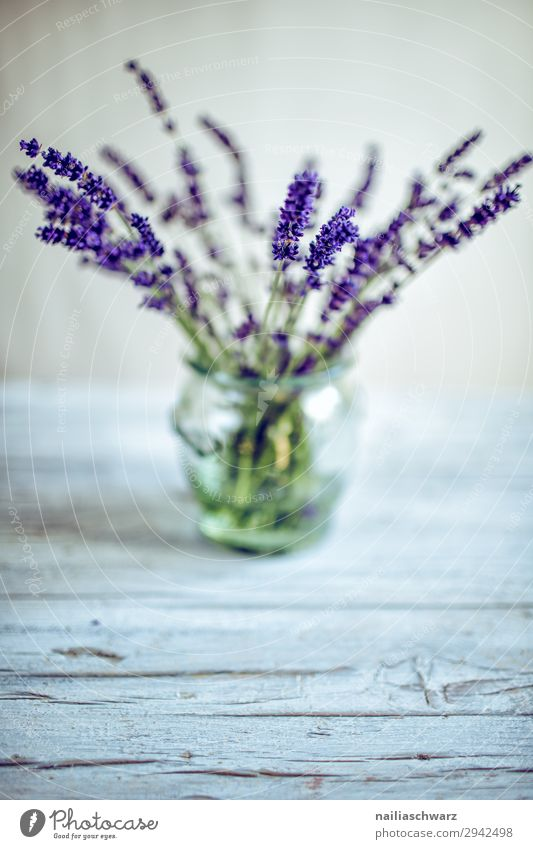 Still Life with Lavender Lifestyle Plant Flower Foliage plant Agricultural crop Vase Glass Bouquet Fragrance Elegant Natural Beautiful Gray Green Violet