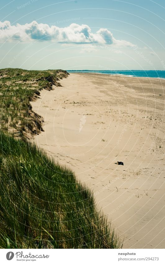 beach weather Landscape Sand Air Water Sky Clouds Spring Summer Autumn Beautiful weather Grass Coast Beach North Sea Dune Blue Gold Green Loneliness Deserted