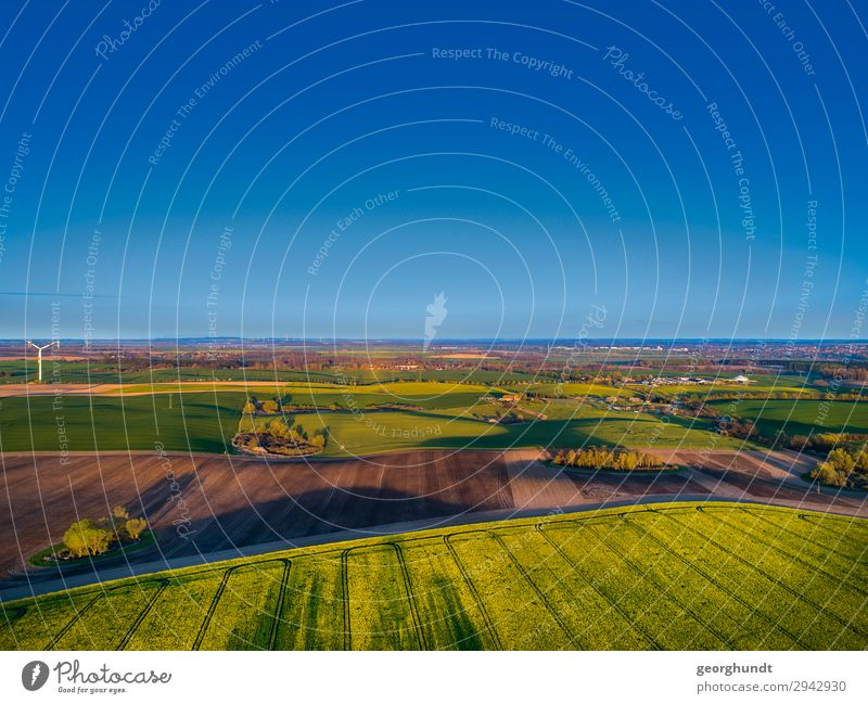 Spring air I Wellness Life Agriculture Forestry Environment Nature Landscape Plant Earth Sand Sky Cloudless sky Field Deserted Blossoming Free Blue Canola