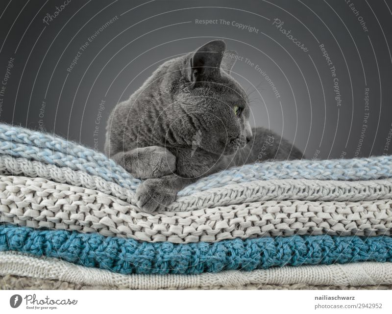 Cat Colour Beautiful Relaxation Animal Calm Lifestyle Moody Living or residing Flat (apartment) Contentment Elegant Idyll Authentic Observe Curiosity