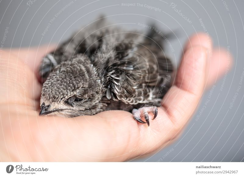 Summer Hand Animal Baby animal Love Small Bird Idyll Cute Help Hope Protection Safety To hold on Peace Painting (action, work)