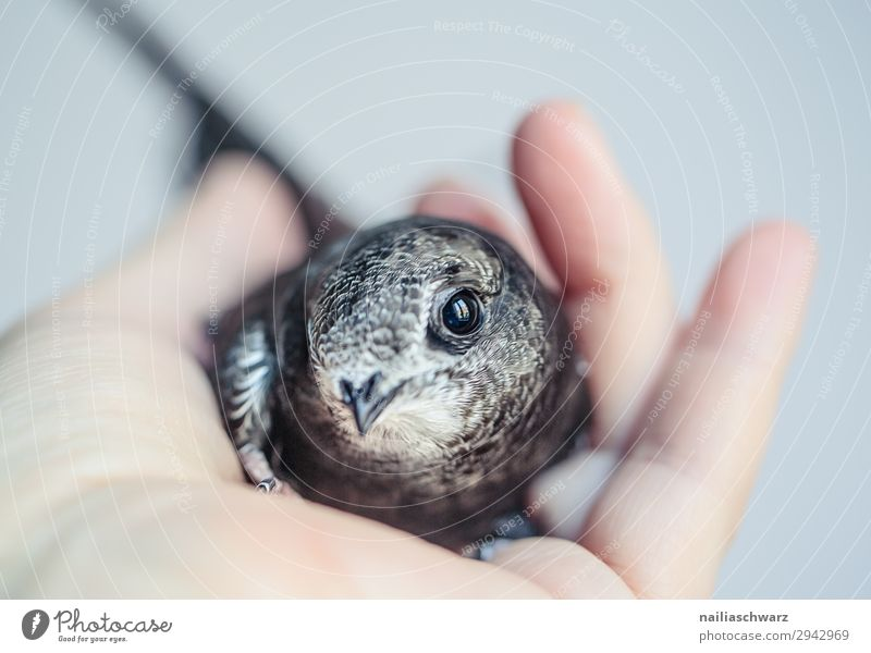Summer Hand Animal Baby animal Love Natural Bird Contentment Power Idyll Cute Observe Help Curiosity To hold on Peaceful