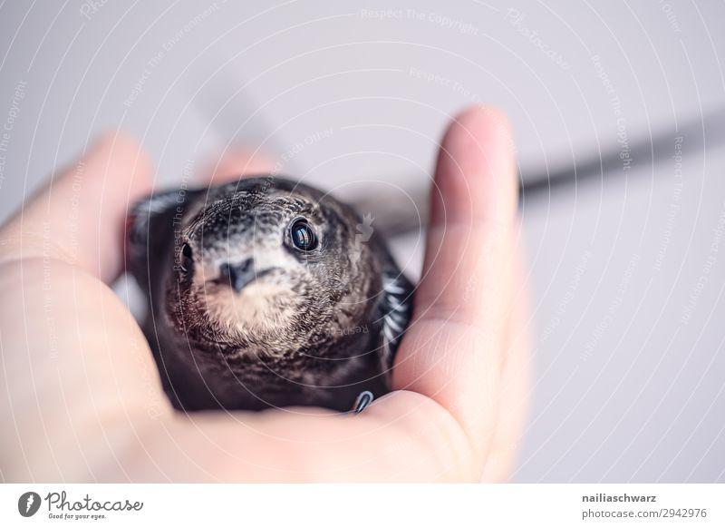 Summer Hand Animal Baby animal Emotions Small Bird Wild animal Idyll Cute Help Curiosity Discover Hope Soft Protection