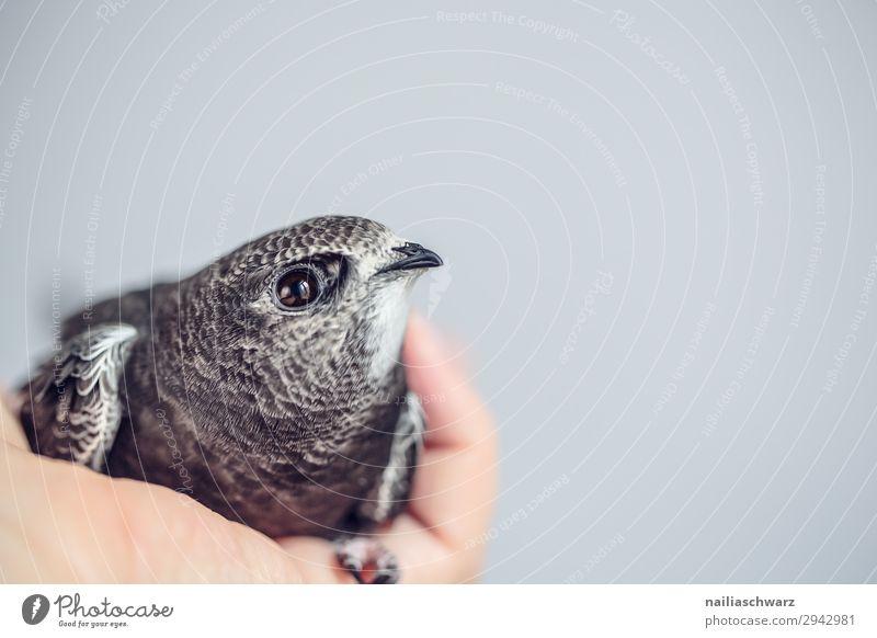 Summer Hand Animal Baby animal Life Natural Bird Gray Lie Wild animal Cute Warm-heartedness Observe Help Curiosity Soft