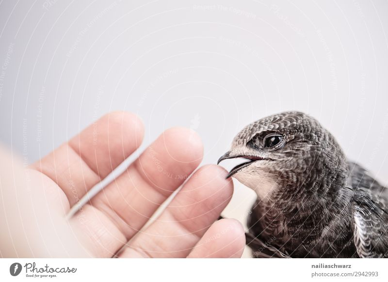 Nature Summer Hand Animal Environment Love Natural Emotions Bird Together Air Power Fingers Wait Cute Observe