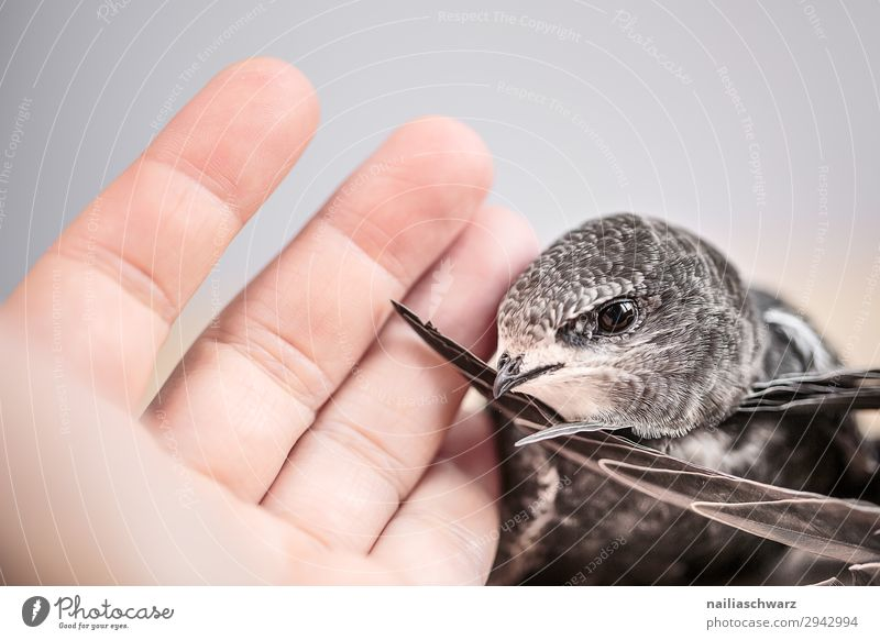 Human being Summer Hand Animal Baby animal Environment Bird Together Wild Communicate Wild animal Fingers Cute Help Friendliness Protection
