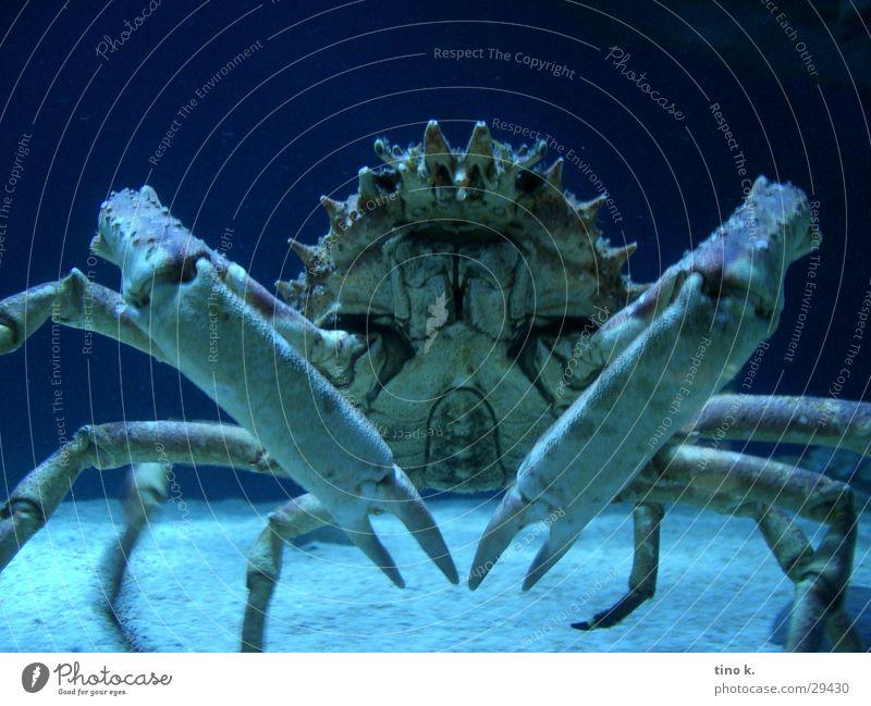 Ocean Dangerous Threat Symmetry Impressive Underwater photo Shrimp Grabber Pinch