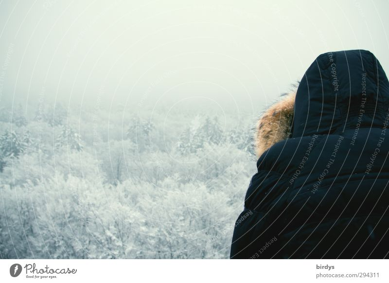 retrospect Winter vacation 1 Human being Nature Landscape Fog Ice Frost Snow Treetop Forest Coat Hooded (clothing) Observe Looking Cold Above Calm Experience