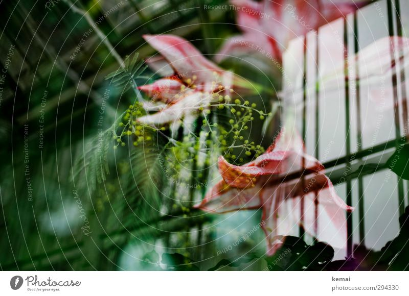 Waxing under the roof Plant Flower Leaf Blossom Exotic Garden Greenhouse Blossoming Growth Pink Colour photo Subdued colour Interior shot Experimental Deserted