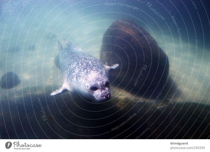 Blue Green Beautiful Water Animal Black Life Funny Gray Swimming & Bathing Brown Elegant Wet Speed Esthetic Animal face