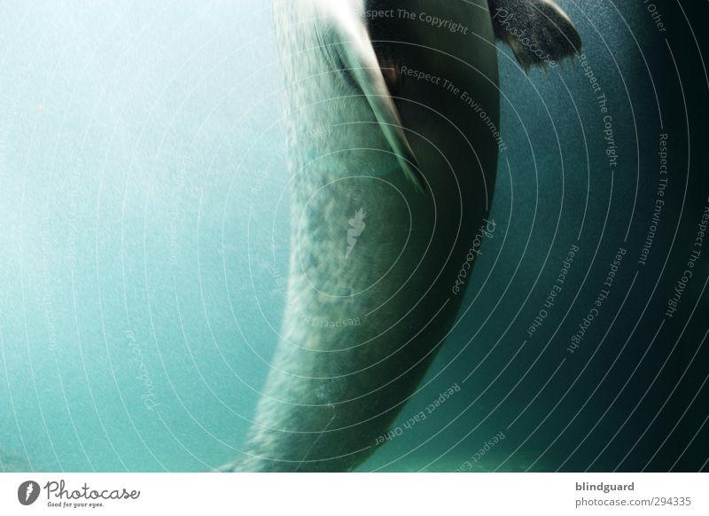 Blue Green Beautiful Water Animal Black Life Gray Swimming & Bathing Elegant Wet Esthetic Hunting Turquoise Flexible Aquarium