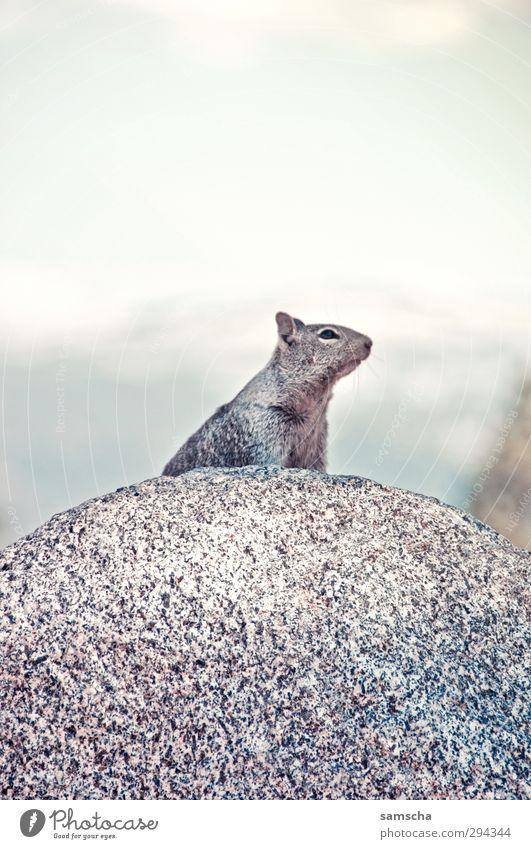 Nature Animal Environment Mountain Freedom Stone Natural Rock Wild Wild animal Wait Hiking Speed Alps Pelt