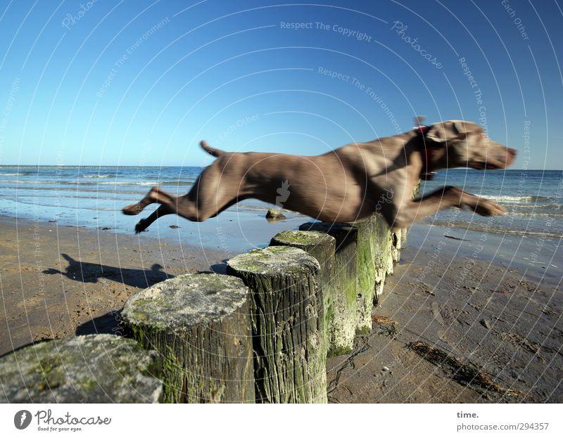 springtime lust Environment Nature Sand Cloudless sky Beautiful weather Waves Coast Beach Baltic Sea Break water Animal Pet Dog 1 Flying Jump Fresh Healthy