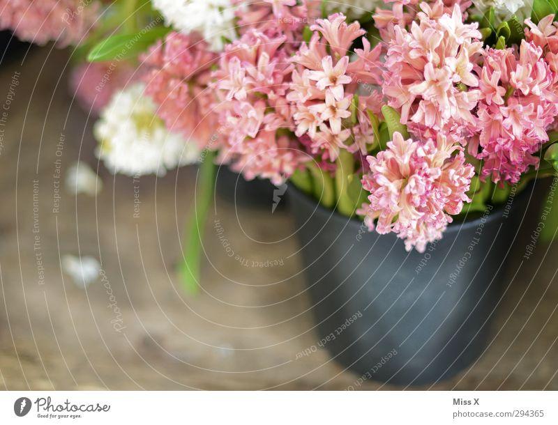 Flower Leaf Spring Blossom Pink Blossoming Bouquet Fragrance Sell Vase Bucket Florist Hyacinthus