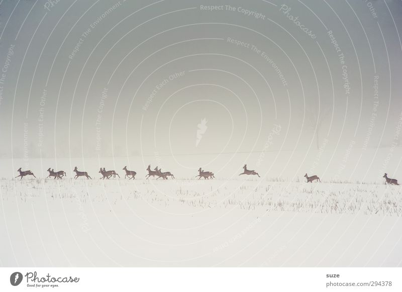 Sky Nature Animal Landscape Winter Environment Cold Snow Gray Field Wild Wild animal Fog Authentic Elements Group of animals