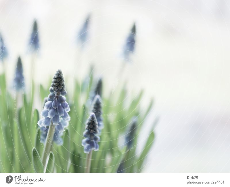 Nature Blue Green Beautiful White Plant Flower Leaf Life Spring Gray Blossom Garden Natural Growth Fresh