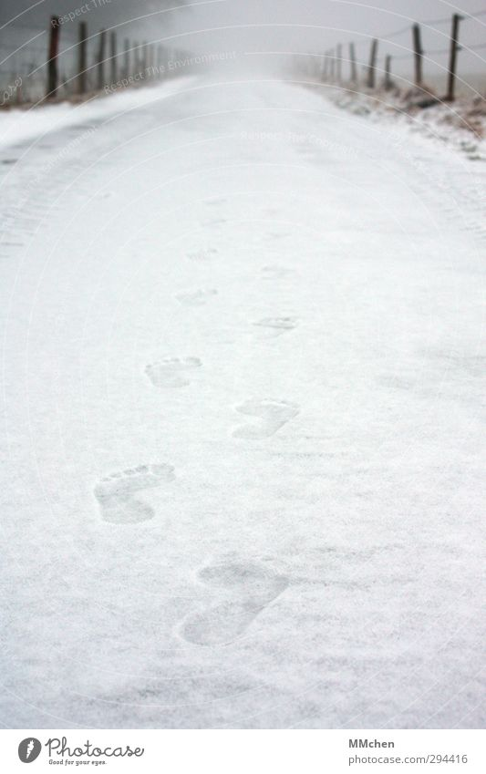 Nature Beautiful White Loneliness Winter Cold Snow Lanes & trails Healthy Ice Weather Power Walking Change Frost Target