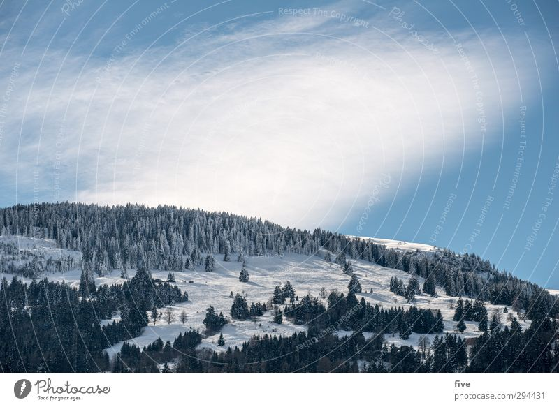 skiing day Skis Ski run Nature Landscape Sky Clouds Winter Beautiful weather Plant Tree Hill Rock Alps Mountain Cold Ski resort Colour photo Exterior shot Day