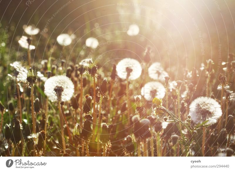 Nature Old White Summer Plant Meadow Warmth Autumn Grass Spring Blossom Garden Bright Park Flying Growth