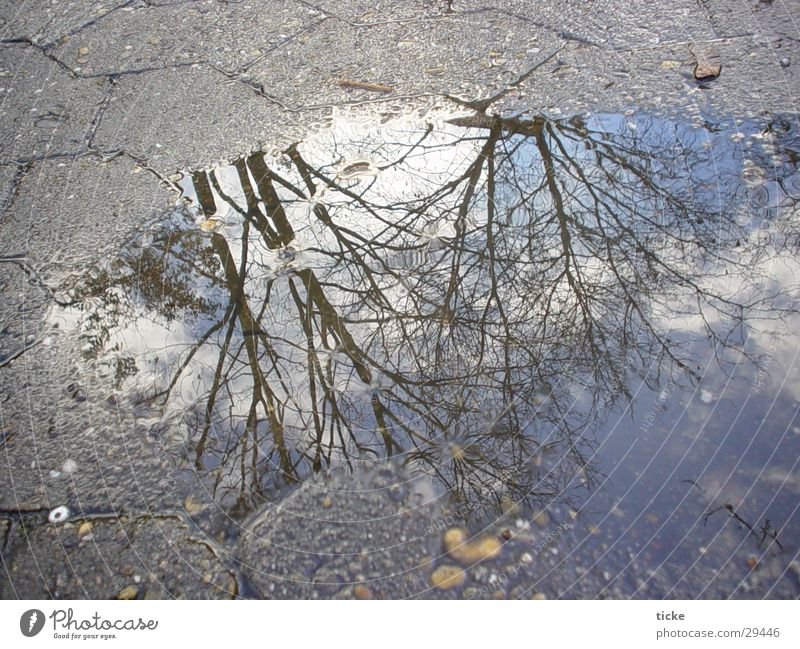 Water Sky Tree Street Asphalt Puddle