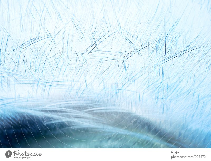 EIS [Winter can be beautiful] Ice Frost Water Line Scratch mark Cold Blue Frozen surface Scratched Blue tone Structures and shapes Colour photo Exterior shot