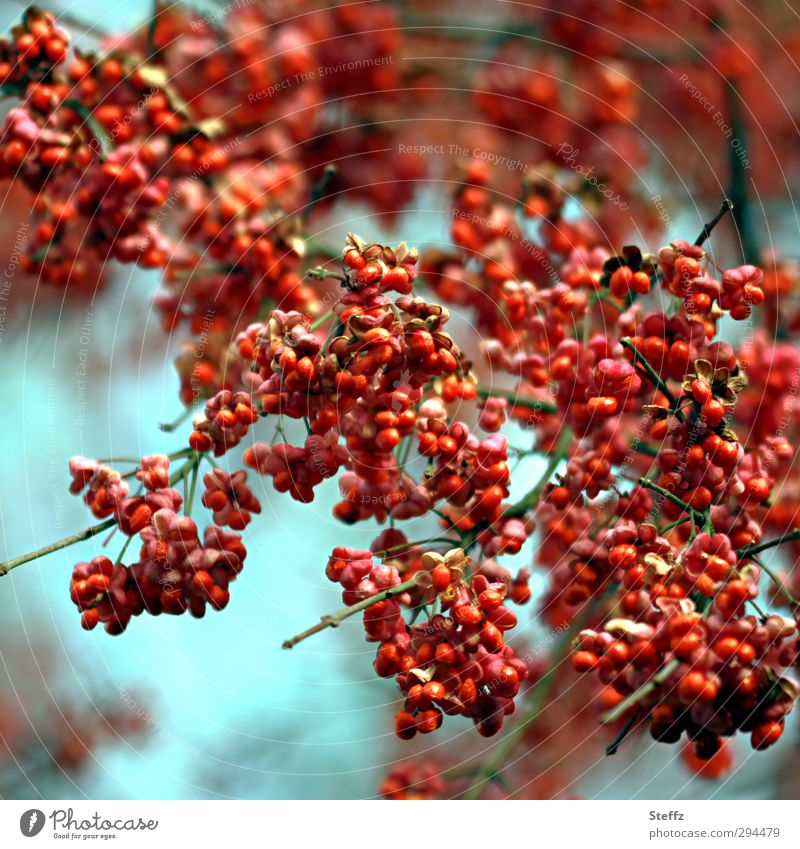 Nature Plant Red Autumn Wild Multiple Bushes Many Twig Berries Autumnal Feed Light blue Wild plant Intensive Surplus