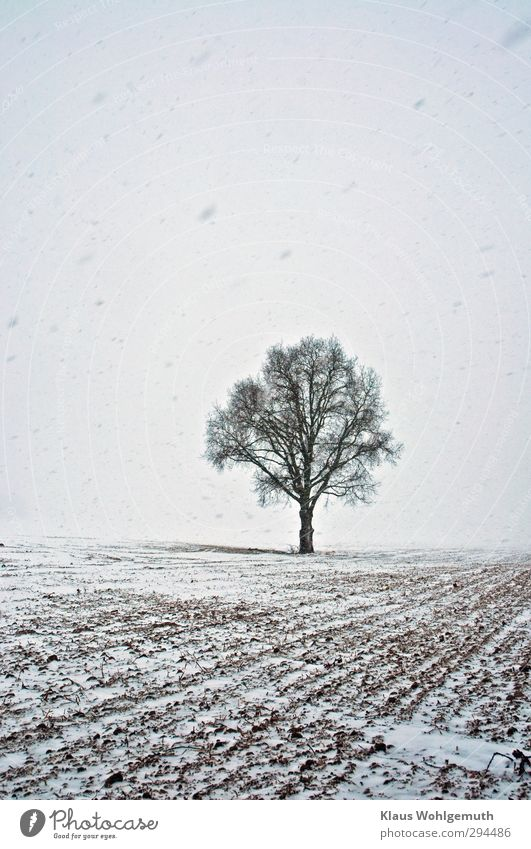 transverse nerve Environment Nature Landscape Plant Winter Bad weather Ice Frost Snow Snowfall Tree Field Freeze Black White Loneliness Oak tree Colour photo