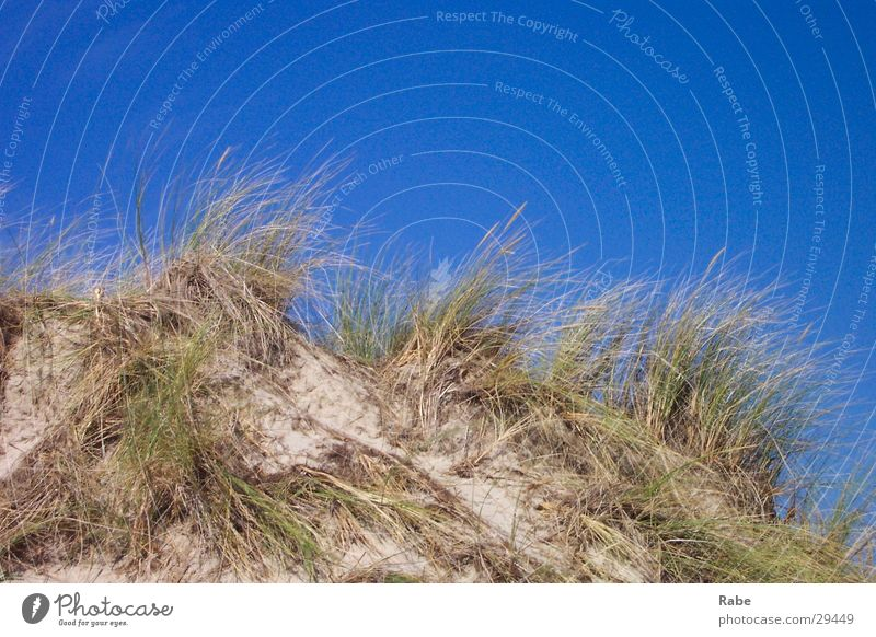 Ocean Beach Grass Sand Island Cloudless sky Beach dune North Sea Netherlands Marram grass Texel