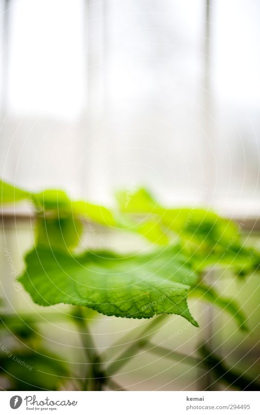 Green Green Plant Leaf Foliage plant Garden Greenhouse Growth Fresh Bright White Energy Colour photo Subdued colour Interior shot Close-up Deserted Day Light