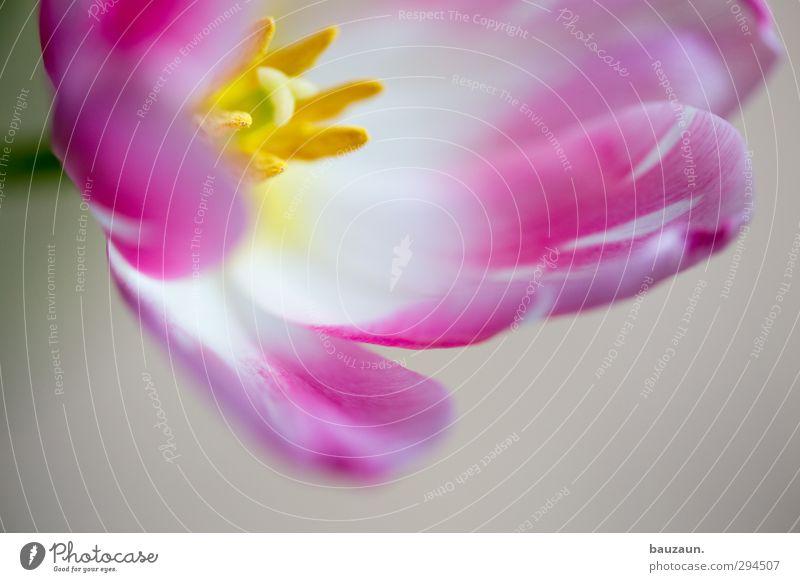 Plant Beautiful White Flower Blossom Style Garden Pink Flat (apartment) Living or residing Decoration Elegant Birthday Esthetic Blossoming Romance