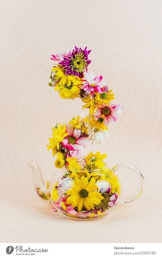 Glass teapot with flowers going up Nature Summer Plant Colour Beautiful Green Flower Yellow Blossom Spring Decoration Seasons Bouquet Blossom leave