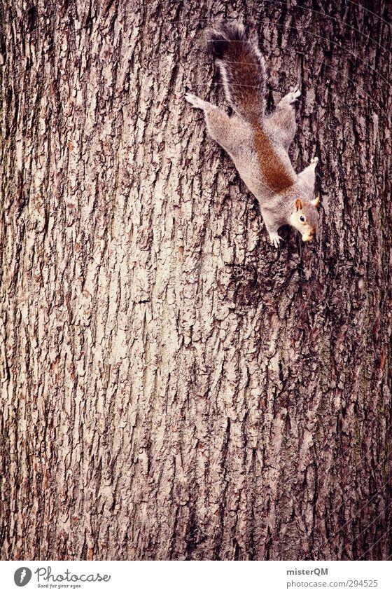 dangle. Art Esthetic Tree trunk Tree bark Dangle Squirrel Climbing Dexterity Gravity Rodent Head first Spirited Climbing facility Climbing tree Animal Nuisance