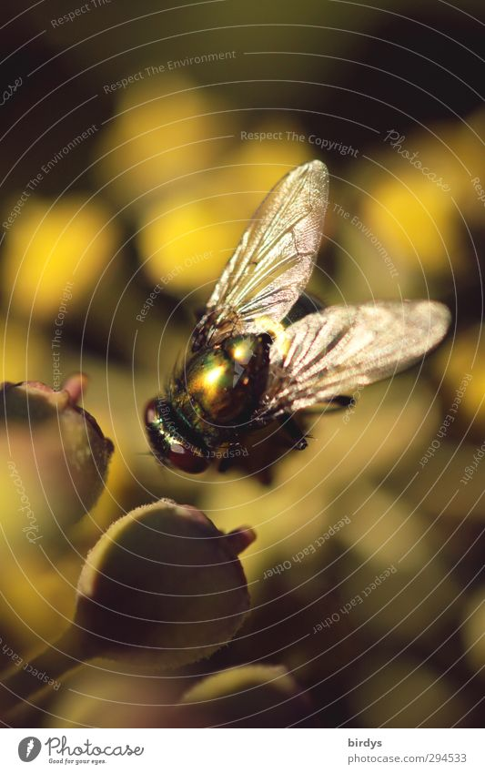 Nature Green Beautiful Summer Plant Animal Yellow Glittering Fly Esthetic Wing Positive
